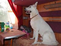 Собака в вагоне